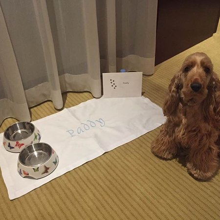 Mandarin Oriental, Paris: Arrival dog amenities