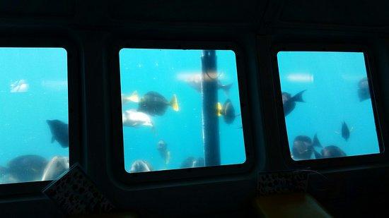 Yellow Submarine Boat Tour : Under the Yellow Submarine