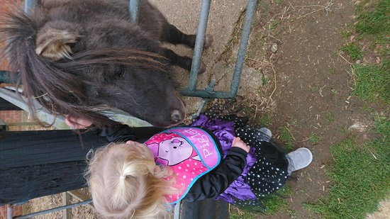 Verwood, UK: Halloween fancy dress at horse centre