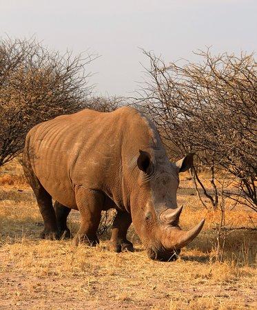 Waterberg Plateau Park, Namibia: Rhinodrive