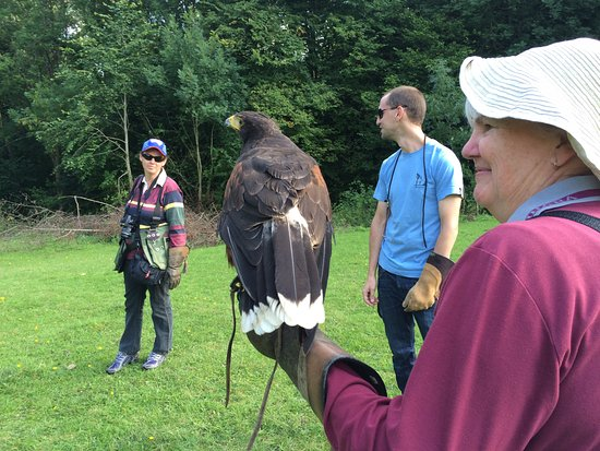 West of England Falconry: Flying Charlie