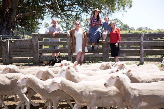 Bow Bridge, Australia: Noack Family at the sheep yard