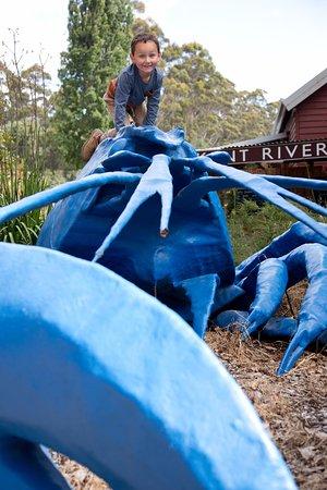 Bow Bridge, Australia: Max and Rex, the giant blue marron