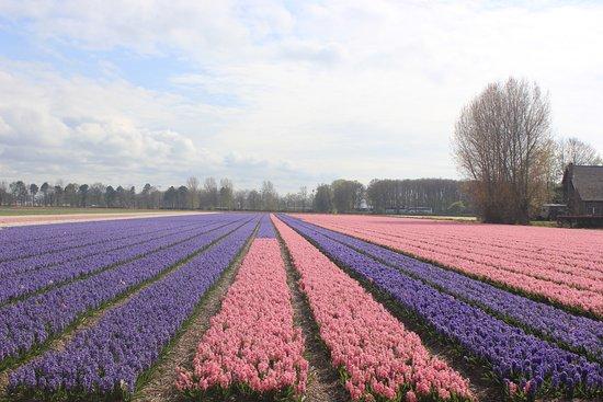 Boerderij 'Oud-Zandvliet'
