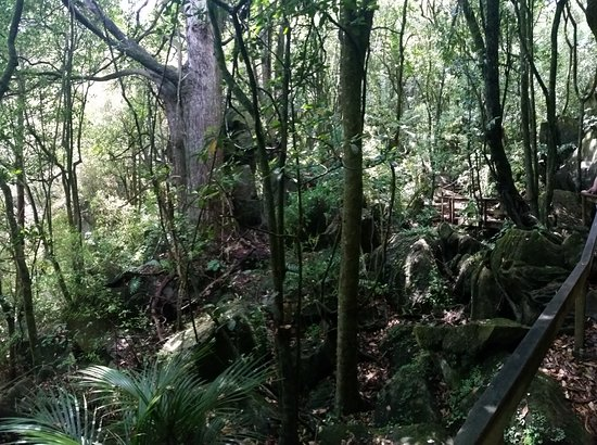 Northland Region, Neuseeland: Bush walk out of caves to car park