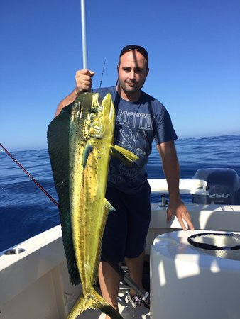Dana Point, CA: Dorado's (also known as Dolphin Fish & Mahi-Mahi) are always one of the funnest fish to target.