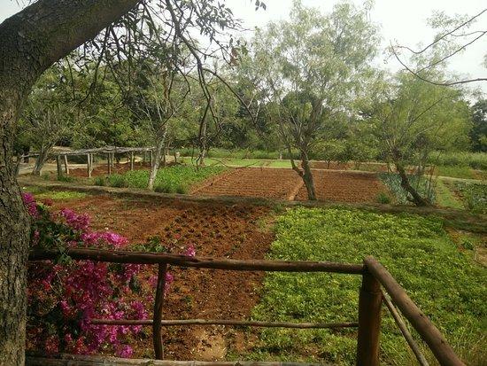 Shreyas Yoga Retreat: Fruits and Vegetable Garden