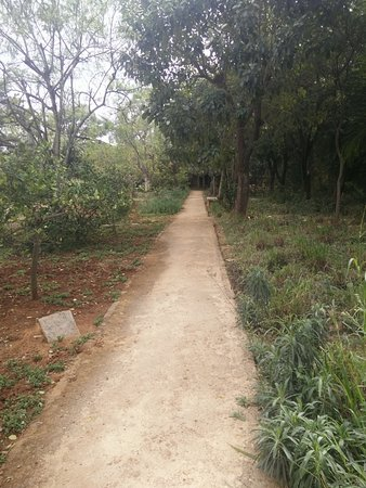 Shreyas Yoga Retreat: Walkway