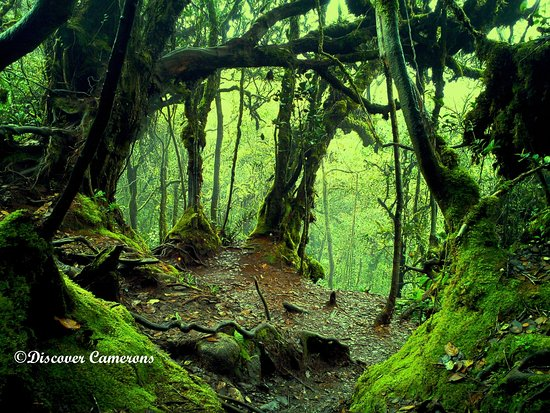 Tanah Rata, Malasia: Think of all the beauty still left around you and be happy.-Mossy Forest the beauty of mother na