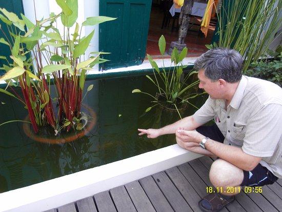 Alliance Alizé Boutique Villa: бассейн с рыбками у ресторана
