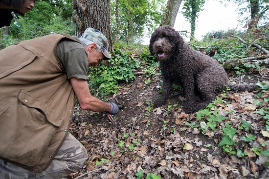 Chi cerca trova! - Picture of Truffle Hunting in Tuscany ...