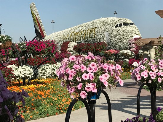 Flowers picture of dubai miracle garden dubai tripadvisor for Garden design dubai