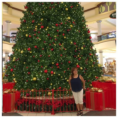 Christmas Tree Altamonte Springs Florida