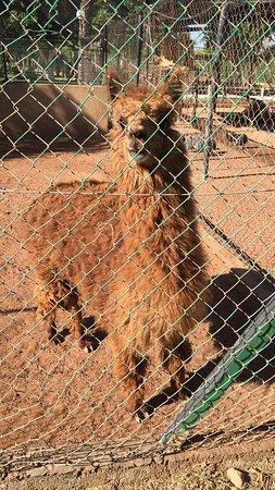 Oulad Teima, Marruecos: Souvenirs de Ouf