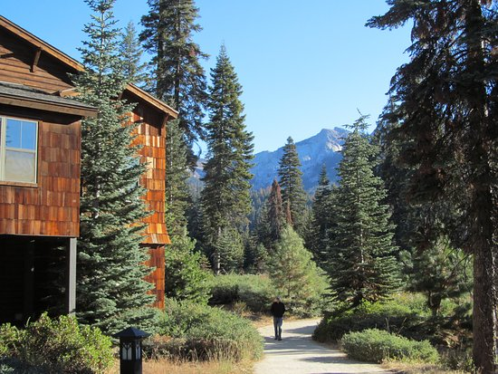 Wuksachi Lodge: The walk between the parking and the lodge rooms.