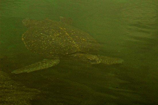 إيزابيلا, الإكوادور: Visita de los tuneles (actividad de Snorkeling a partir de la Isla Isabela)