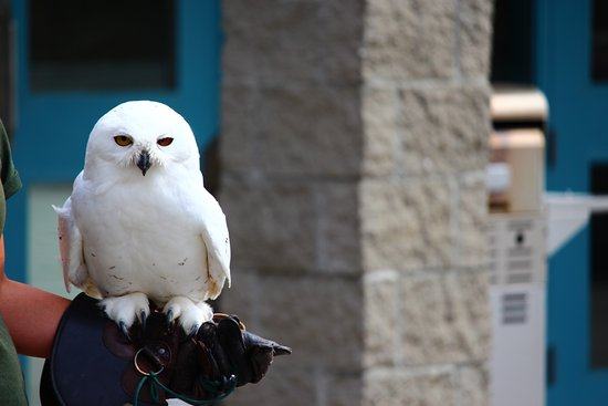 Kamloops Wildlife Park: This is the Snowy Owl