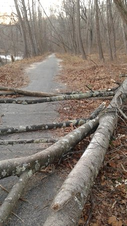 Ellicott City, MD: Trees blocking the path (Beware if problems walking/ stepping over)