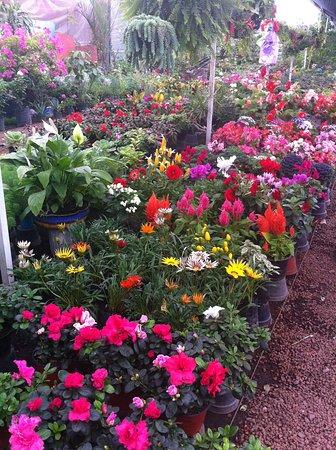 Floating Gardens Of Xochimilco: Gardening Stores