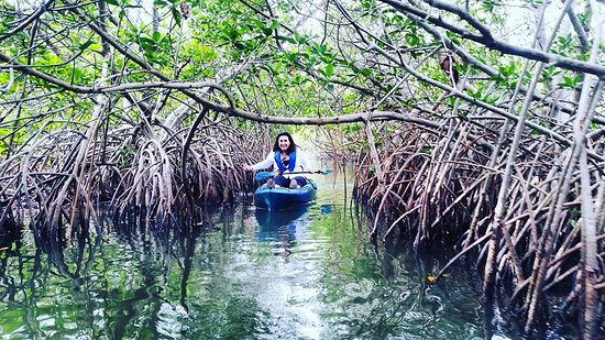 Mangrove Tunnels in the Thousand Islands of Cocoa beach FL