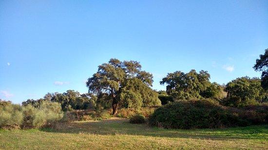 Casas Rurales Elanio Azul: Vista
