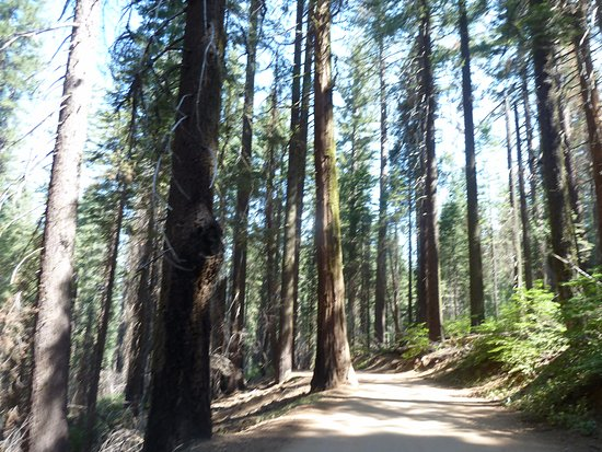 Tuolumne Grove of Giant Sequoias