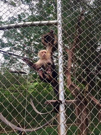 Artola, Costa Rica: One of the monkeys