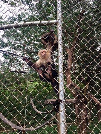 Artola, كوستاريكا: One of the monkeys