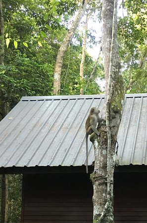 Kota Kinabatangan, Malasia: photo0.jpg