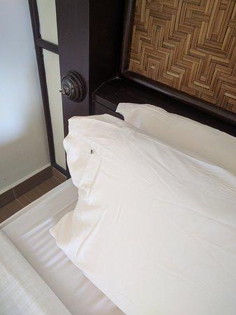 Swiss-Garden Beach Resort Damai Laut: flies in the room