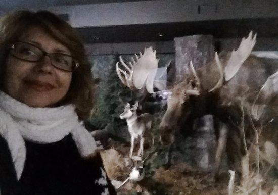 The Den - Jasper's Wildlife Museum: Moose.
