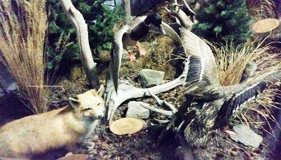 The Den - Jasper's Wildlife Museum: Fox.