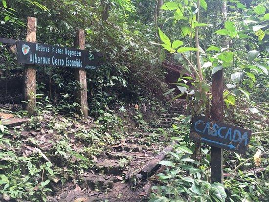 Karen Mogensen Nature Reserve, Costa Rica: sentiero nella foresta