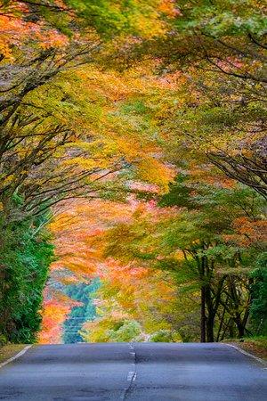 Jurigi Highlands: 紅葉回廊