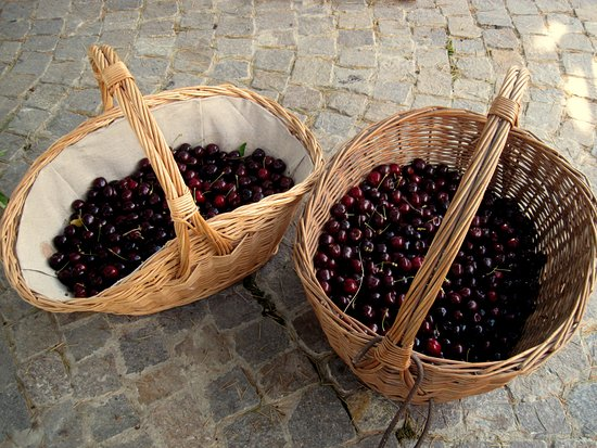 Cascina Blon: The harvest