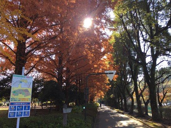 Kumamoto Athletics Stadium (Umakana Yokana Stadium) : 公園内の紅葉