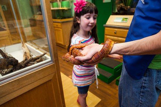 Sciencenter: Meet live animals in the Saltonstall Animal Room