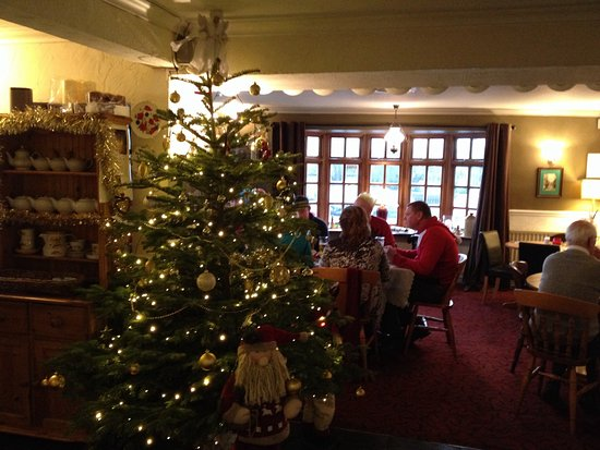 The Bell at Standerwick: Great tree