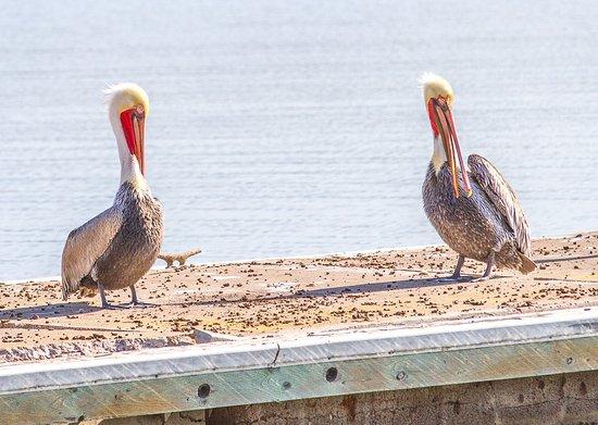 Mission Bay RV Resort : Morning gossip