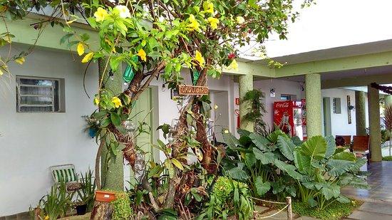 Palmeira Dos Indios 사진