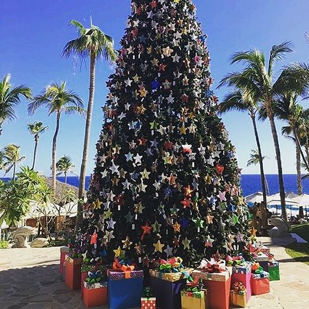 VIP Transportation Los Cabos: Merry Christmas