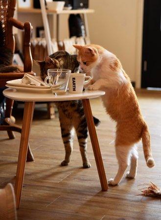 Catcafe Op z'n Kop