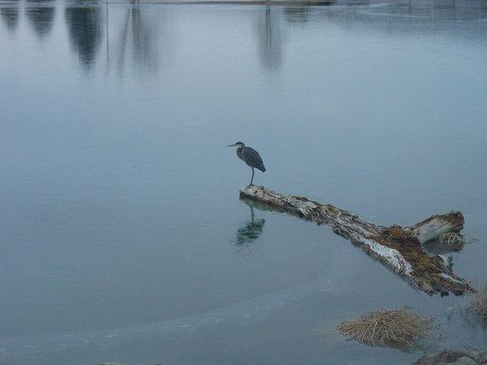 Delta, Колорадо: Crane or Heron in Confluence Lake