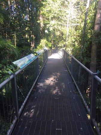 Cow Bay, Australia: Aerial walkway