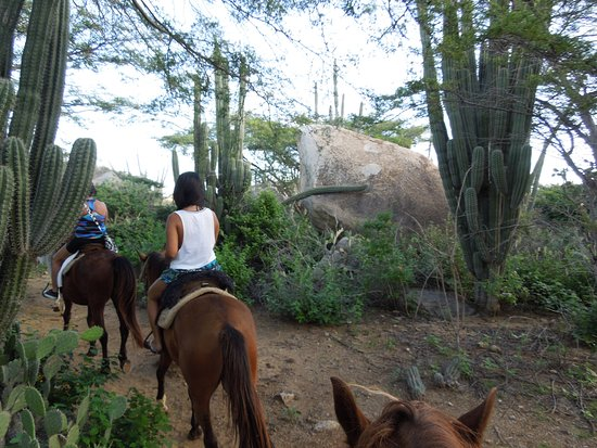 Paradera, Aruba: On the Cactus trail