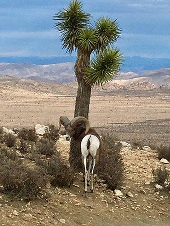 Twentynine Palms, Kalifornien: photo6.jpg