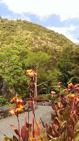 Whangarei, Nieuw-Zeeland: IMAG3962_large.jpg