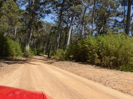 Walpole, Australia: Good quality unsealed road