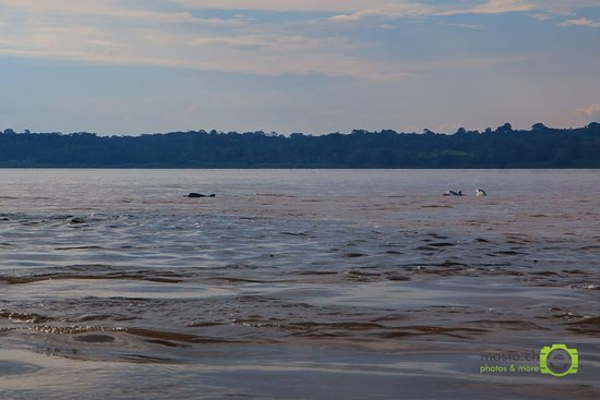 Llaquipallay Lodge and Expeditions : River Dolphins