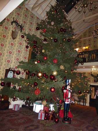 ramside hall hotel golf spa the largest christmas tree i have ever seen - Largest Christmas Tree